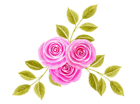 Hand drawn watercolor painting with pink roses flowers bouquet isolated on white background. Floral ornamen. Design element.