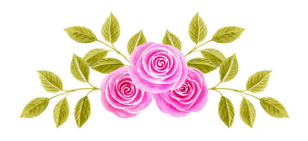 Hand drawn watercolor painting with pink roses flowers bouquet isolated on white background. Floral ornament. Design element.