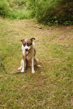 colorful dog on a leash Banque d'images