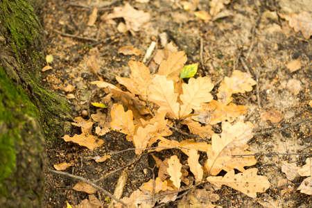 yellow autumn leaves lie on the ground Zdjęcie Seryjne