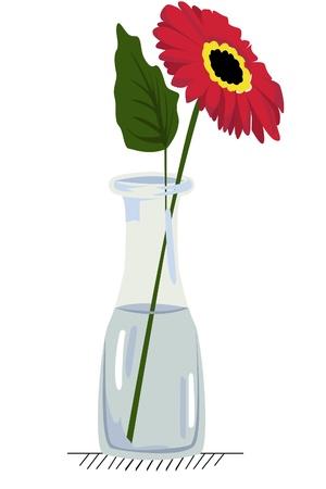 vector illustration of gerbera in glass vase