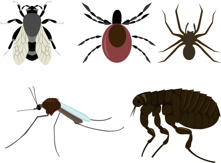 mite: insects Illustration