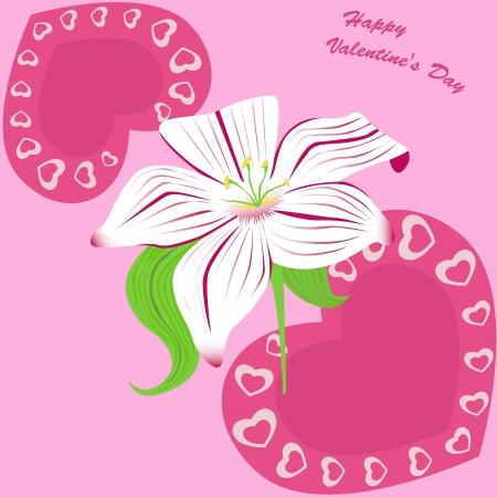 stamen: white lily on pink Illustration