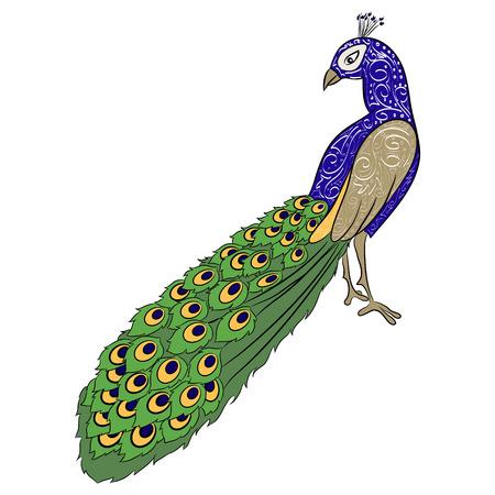 hand drawing peacock  Vector