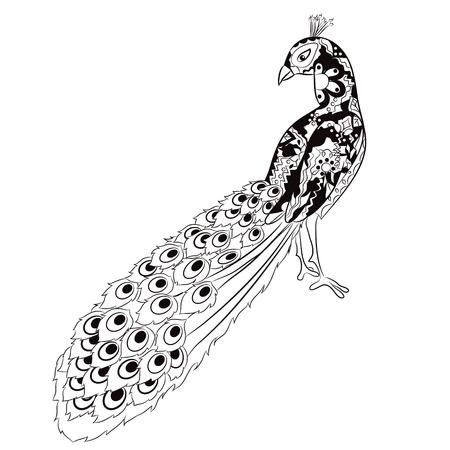 disegno a mano: disegno a mano pavone