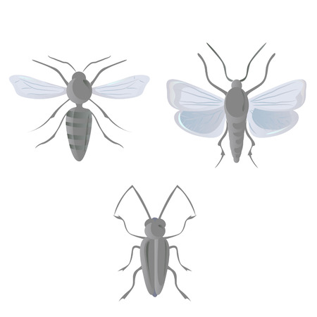 creep: Grey insects Illustration