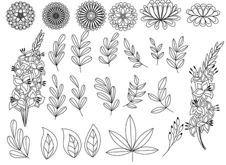 aster: Vector set of outline autumn leaves and flowers Illustration