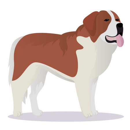st bernard: St Bernard dog vector illustration