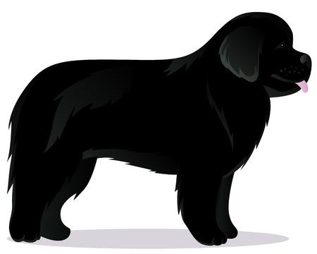 Newfoundland dog black vector illustration Illustration