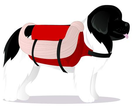 newfoundland: Newfoundland dog lifesaver vector illustration
