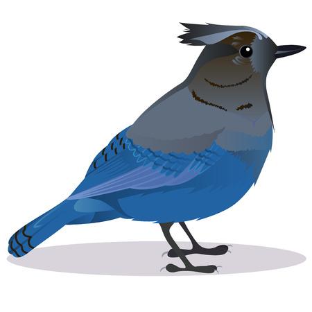 Stalker joke bird cartoon vector illustration