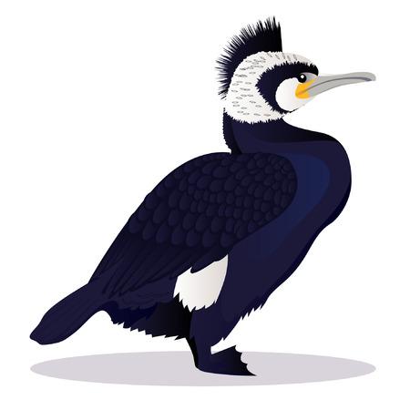 Cormorant bird cartoon vector illustration