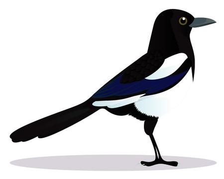 Magpie bird cartoon vector illustration