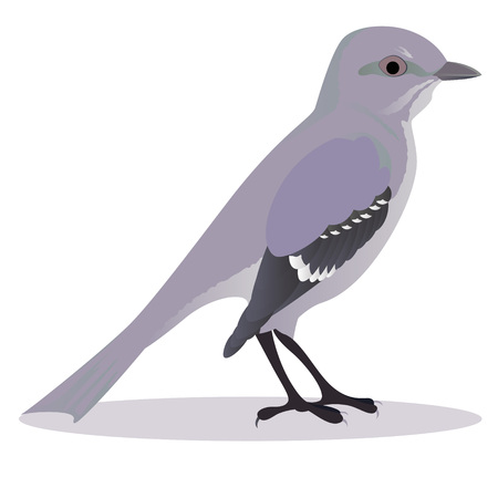 Mockingbird Cartoon Vector Illustration