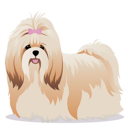 shih tzu: Shih tzu dog vector illustration