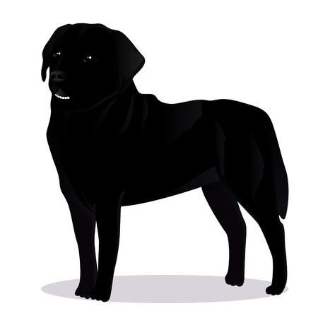 labrador: Labrador retriever dog vector illustration