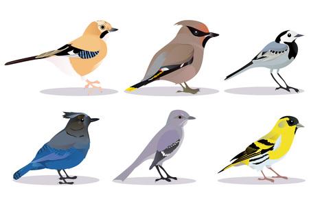 Set of birds vector illustration