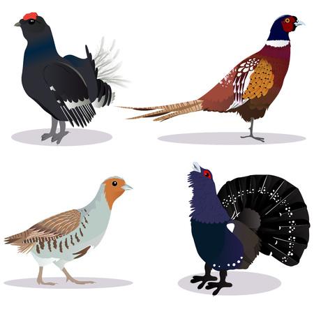 Set van vogels vector illustratie