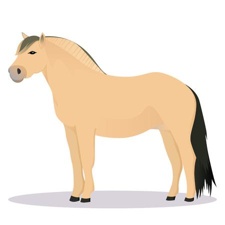 Fjord horse Illustration