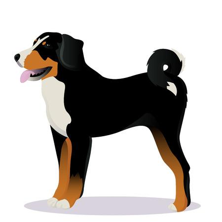 Appenzeller sennenhund dog vector illustration Illustration