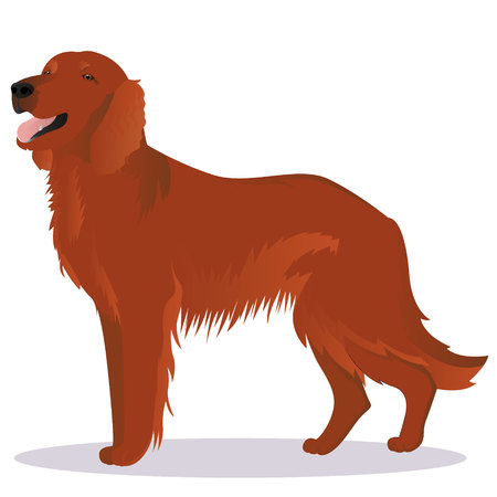 Irish red setter dog Stock Vector - 76468396