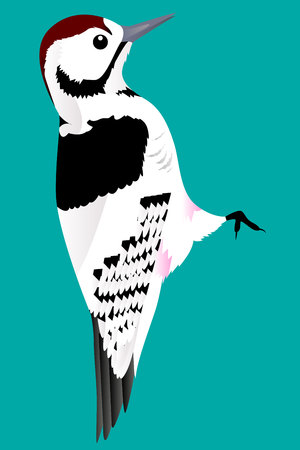 Woodpecker cartoon vector illustration Illustration