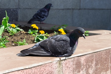꽃 침대에서 쉬고 비둘기