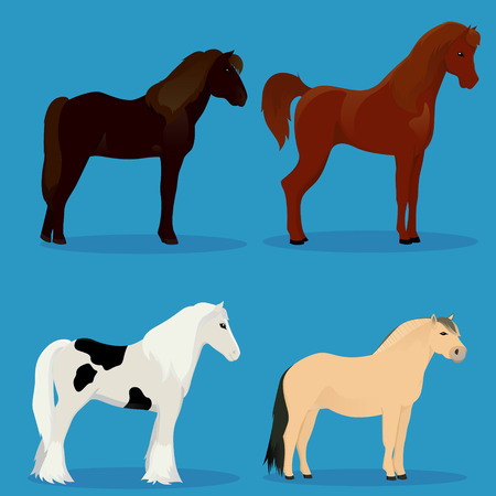 set of horses vector illustration Illustration