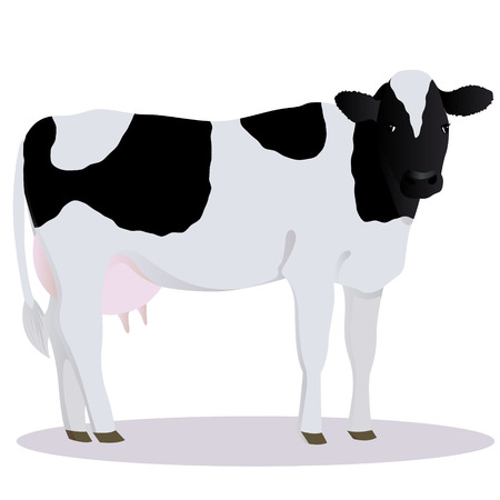 Holstein Friesian cattle vector illustration