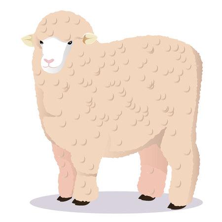 Merino sheep vector illustration