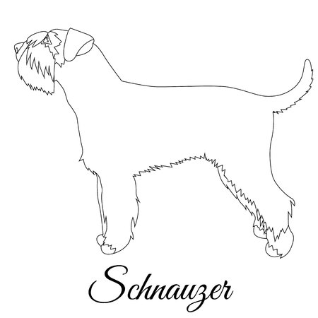 Schnauzer vector illustration