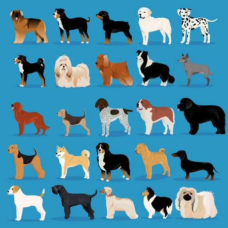Big set of dogs vector illustration Ilustrace