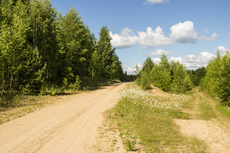 Sandy road in the forest area photo