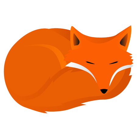 Fox curled up
