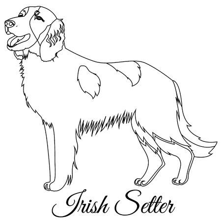 Irish red setter dog outline vector illustration