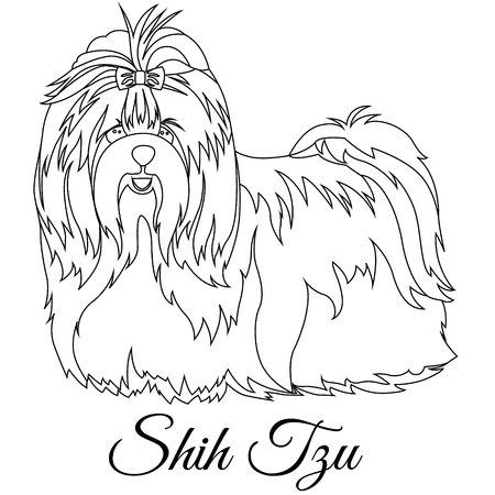 Shih tzu outline on white background, vector illustration.