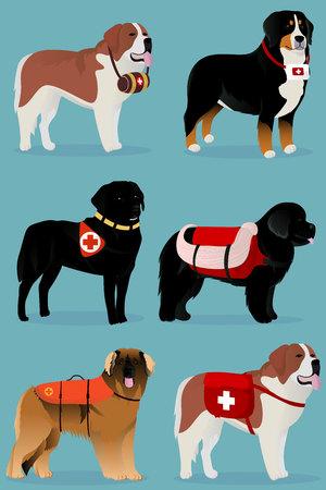 Set of dogs rescuers vector illustration Illustration