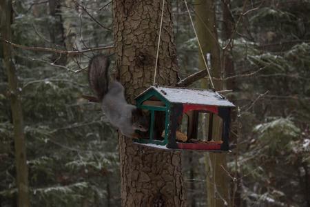 Squirrel eats on a tree photo Stock fotó