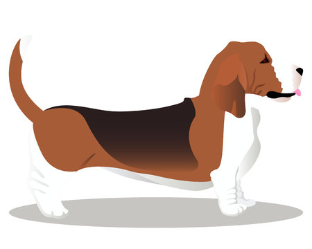 Basset hound dog vector illustration Illustration