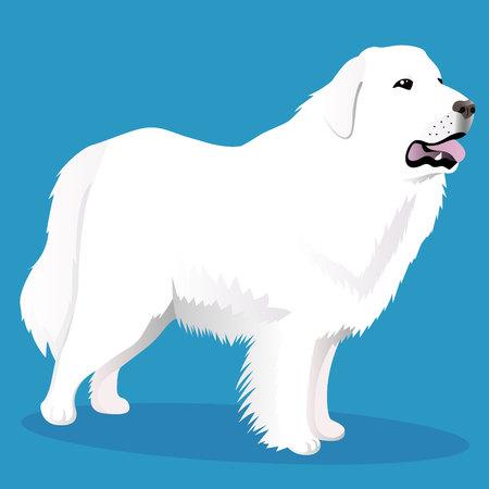 Great Pyrenees dog  イラスト・ベクター素材