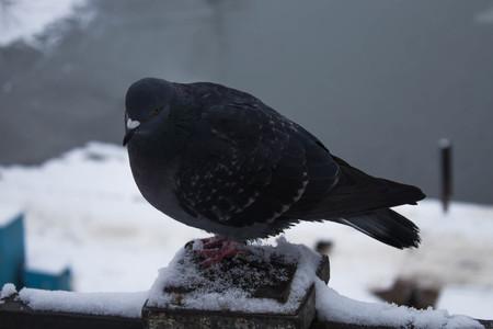 Pigeons sit on railing