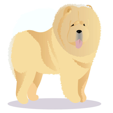 Chow chow dog tricolor. Illustration