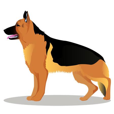 German shepherd cartoon dog illustration.