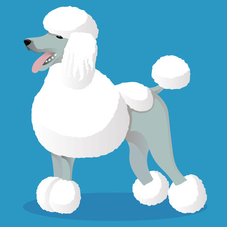 Standart poodle white cartoon dog Illustration