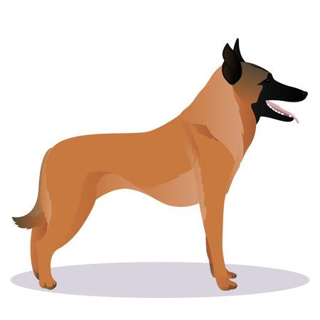 Malinois cartoon dog