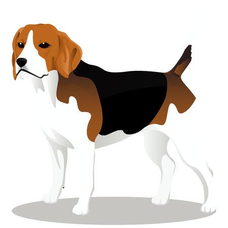 Beagle cartoon dog