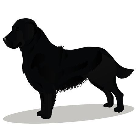 블랙 리트리버 강아지 일러스트