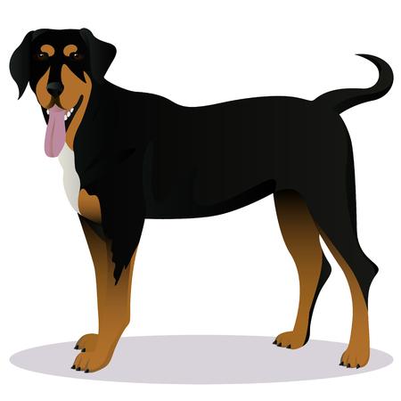 Illustrazione di vettore del cane del fumetto di segugio della Transilvania. Archivio Fotografico - 96173100