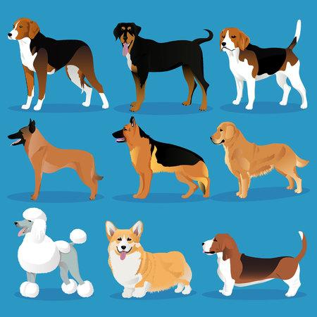 Set of dogs vector illustration