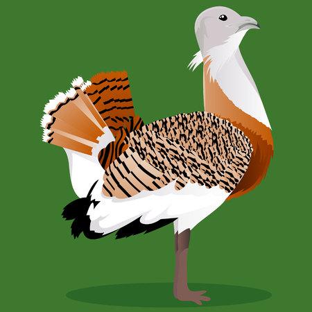 Great bustard cartoon bird on green background.